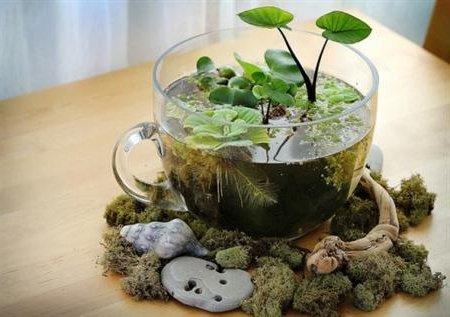 ya que se pueden agregar adems de dichas plantas piedras y musgos para crear un hermoso centro de mesa como el que vemos a continuacin