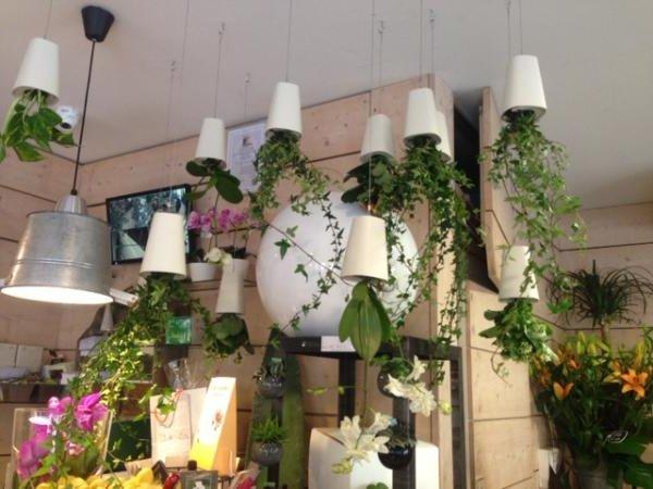 Macetas para colgar en pared baratas casa dise o - Plantas de exterior baratas ...