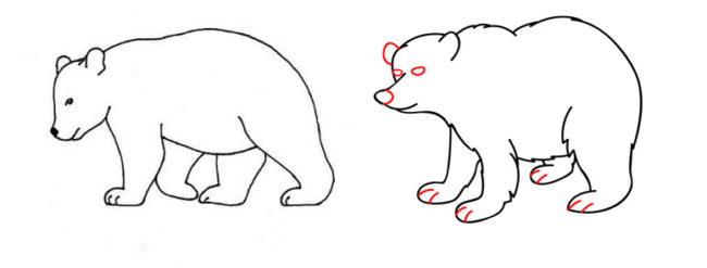 Como dibujar un oso